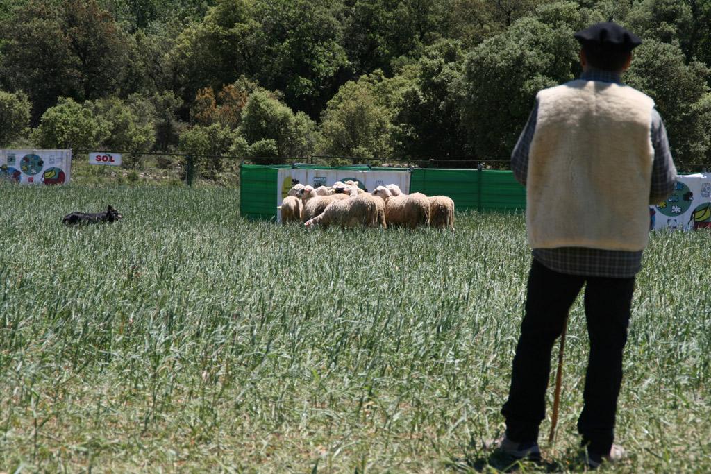 Concurso de Perros Pastores de Ares del Maestrat