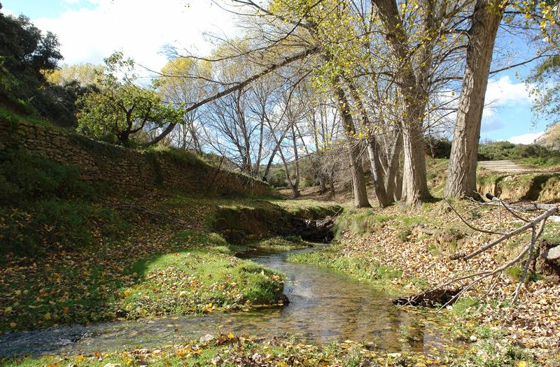 Paraje Natural Municipal del rio Molinell, Castellón Interior