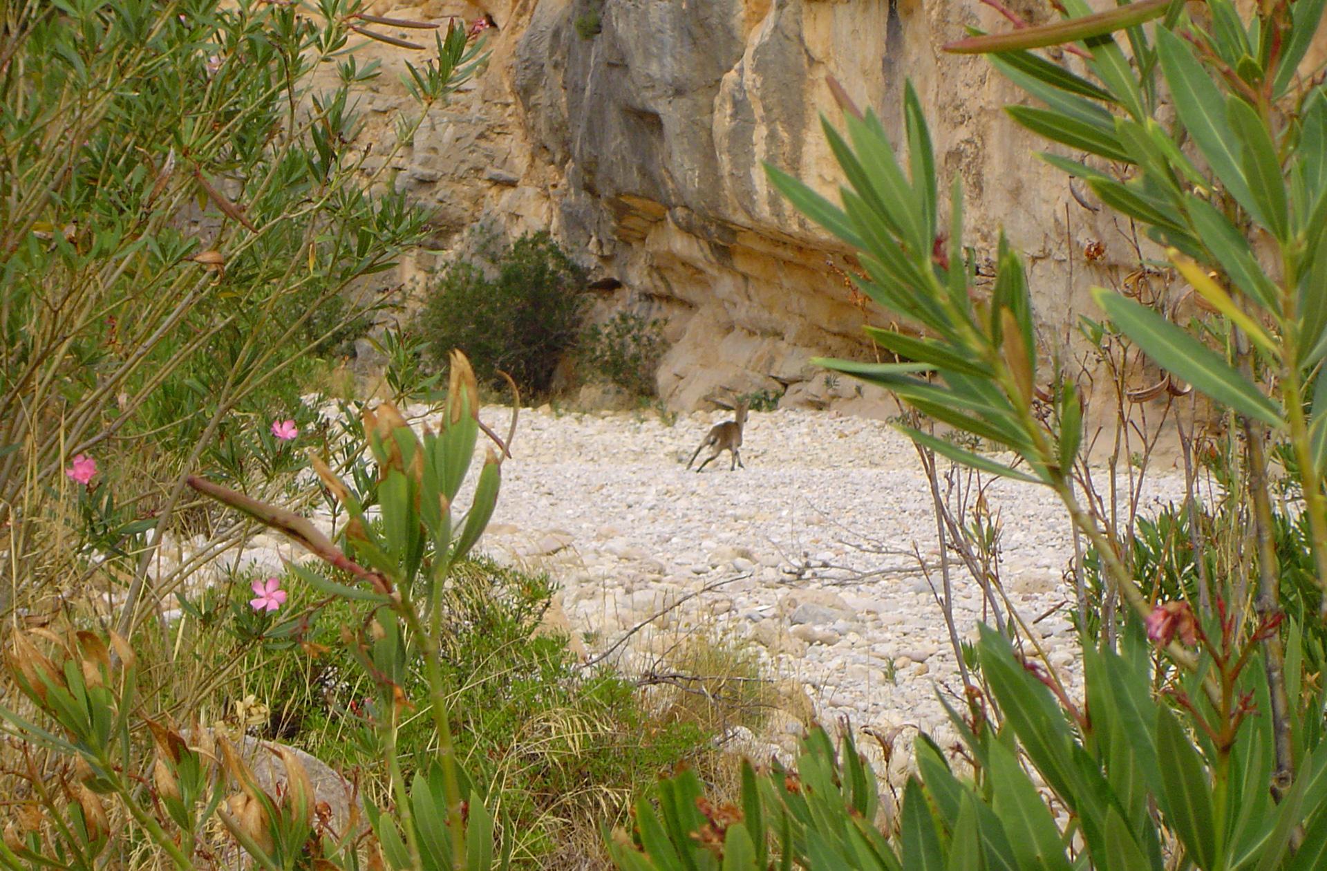 fauna en libertad Paraje Natural del rio Montlleó