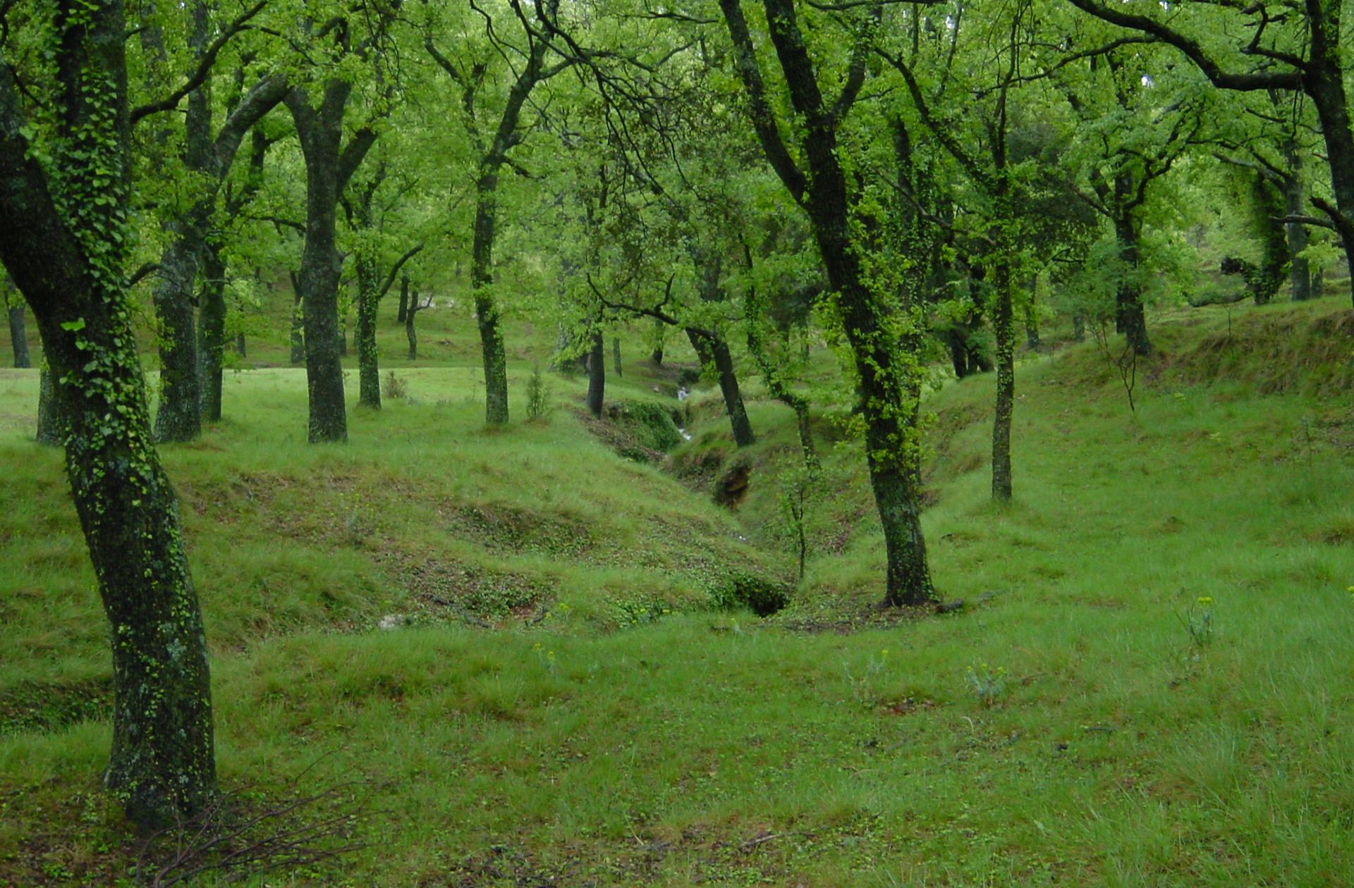 paisajes naturales en el Paraje Natural Municipal El Rivet