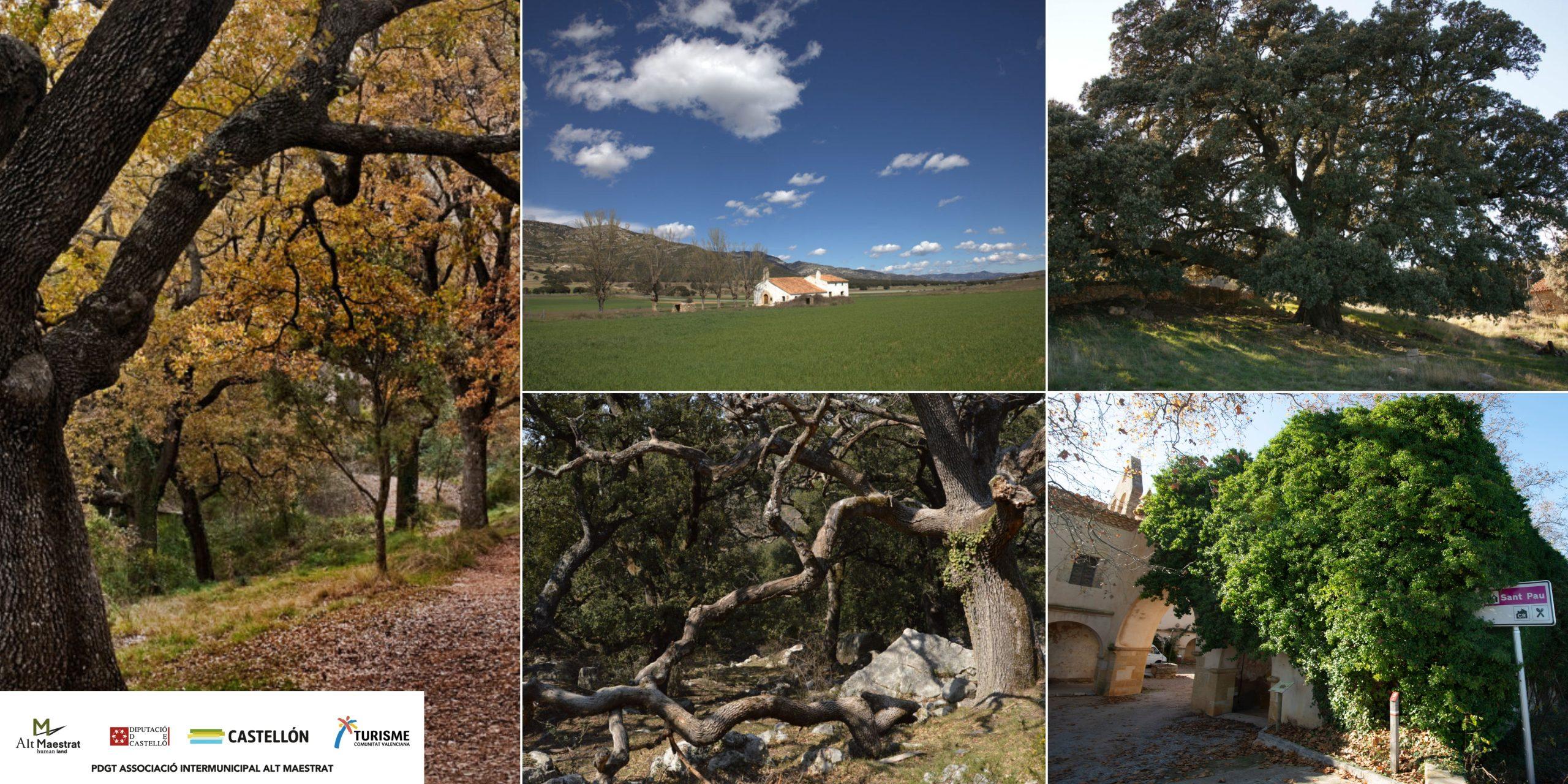 Descubre los árboles monumentales del Alt Maestrat